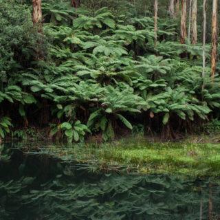 Lake Elizabeth nature walk